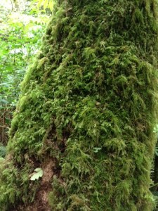 mossy detail