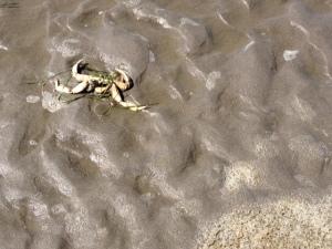 crab carnage