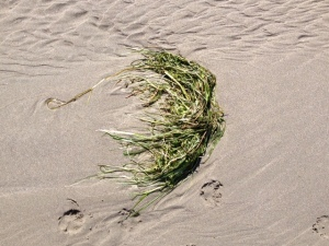 washed sea grass