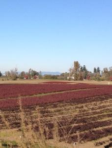 fiery fields