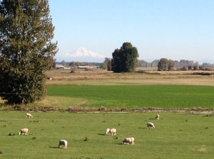 Mount Hood and sheep