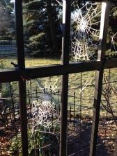 dual spider webs