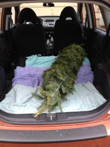 tree in car