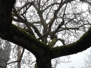 hearty tree moss