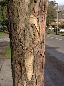 cool bark