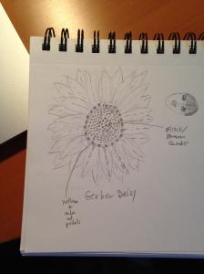 sketching daisy